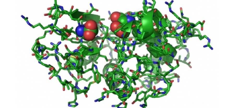 Как происходит процесс синтеза белка и как в нем задействованы аминокислоты