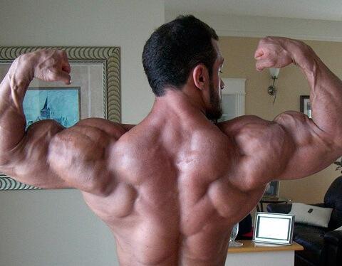 мышцы трапеции