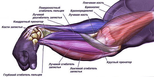 анатомия участка