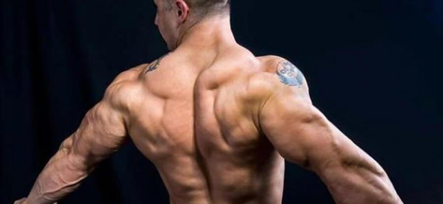 Как правильно качать мышечную группу спины: анатомия и набор упражнений