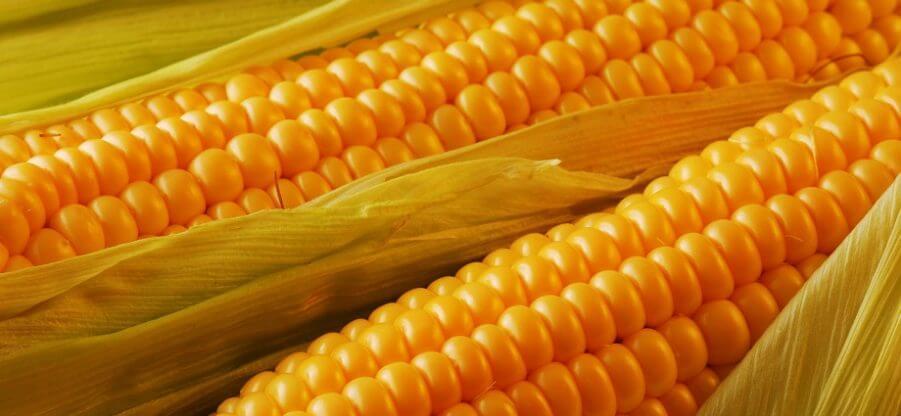 Сколько в вареной кукурузе калорий, белков, жиров и углеводов?