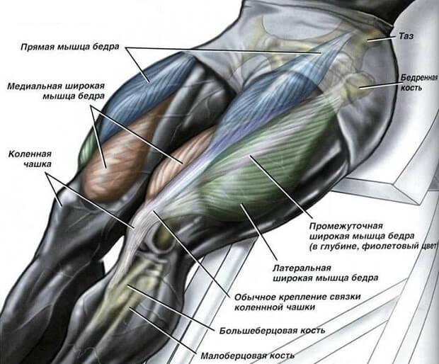 четырехглавая мышца