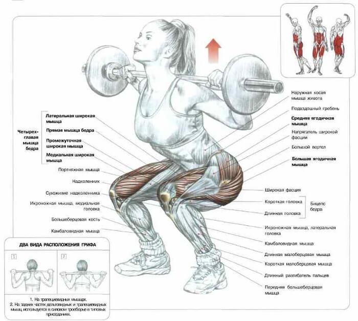 работающие группы мышц