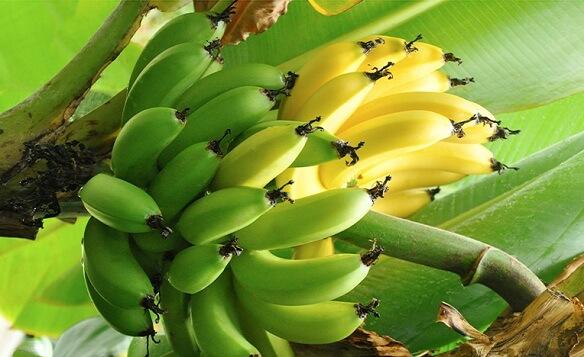 растущий плод