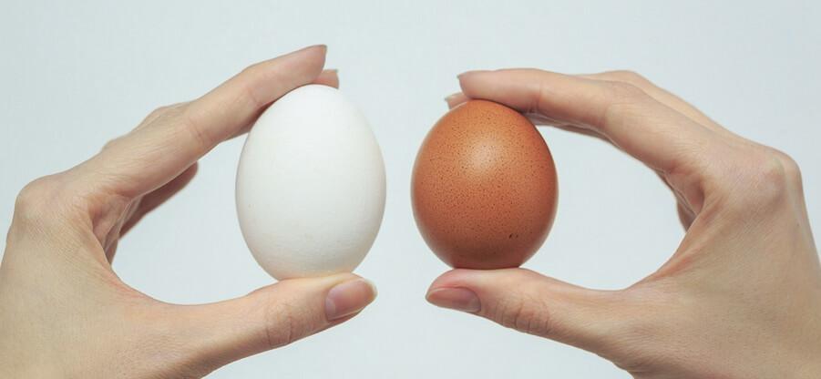 Куриное яйцо: состав и полезные свойства белка и желтка