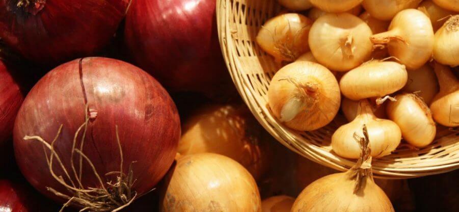 Какие витамины содержатся в репчатом и зеленом луке, подробный состав
