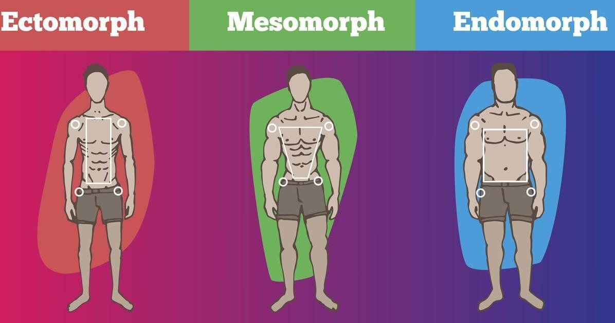 Типы телосложения тела у мужчин: эктоморф, мезоморф, эндоморф