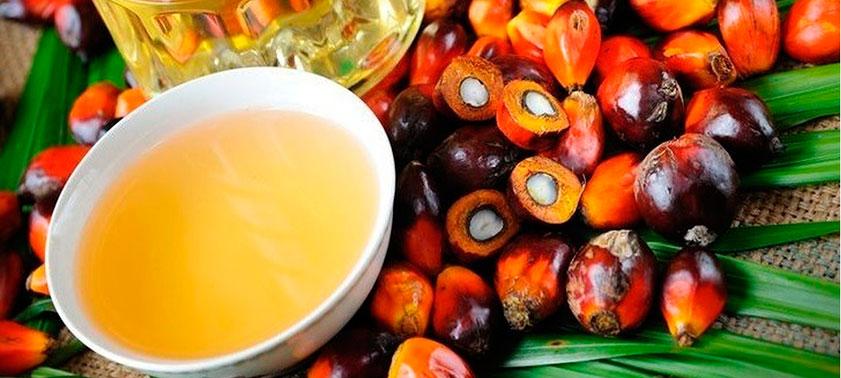 Чего больше от пальмового масла – вреда или пользы?